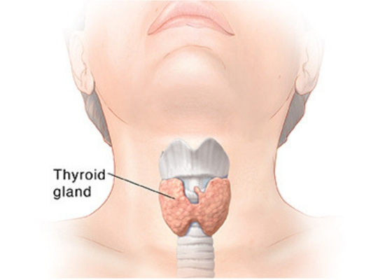 thyroid level stable
